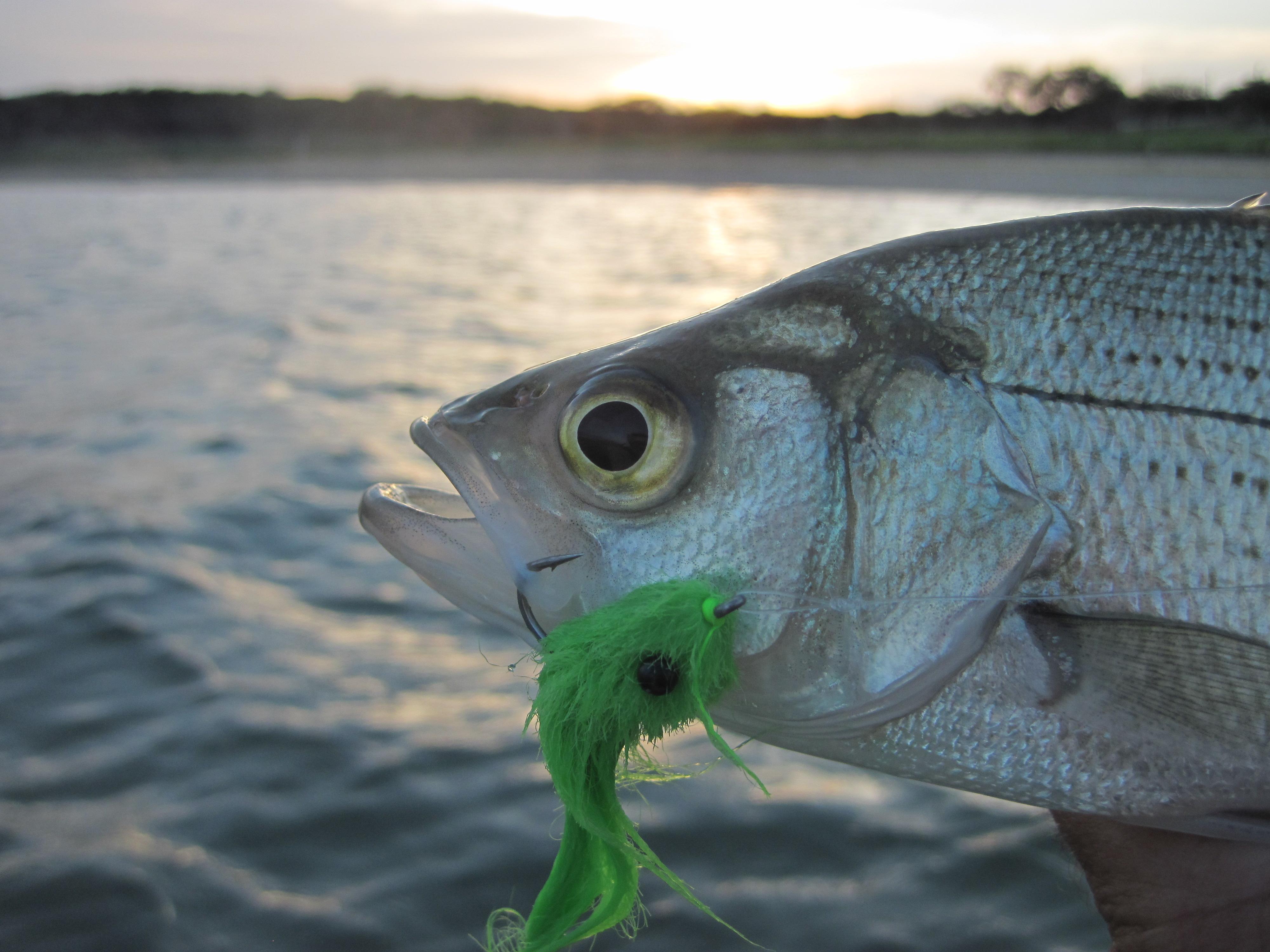 Canyon Lake Fly Fishing Report 3 15 2012